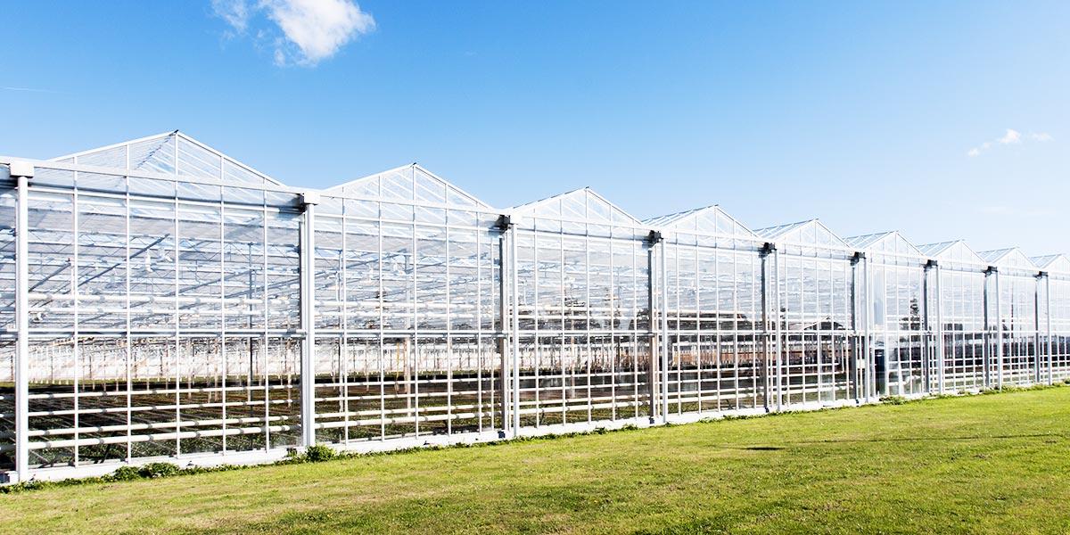 农业温室大棚PC阳光板案例